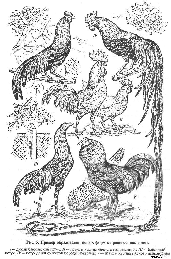 Эволюция птицы